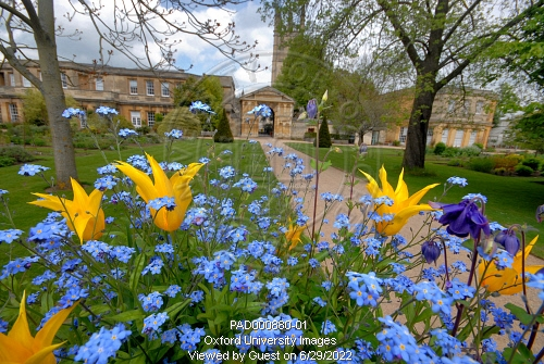 The spring flower beds in the university of oxford botanic garden by oxfordpad000880 01preview mightylinksfo