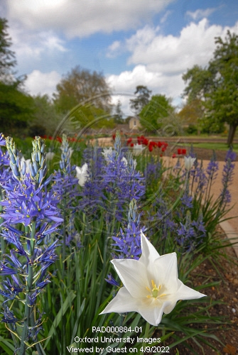 The spring flower beds in the university of oxford botanic garden by oxfordpad000884 01preview mightylinksfo